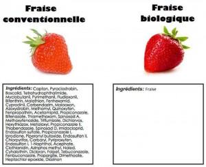 Fraise conventionnelle vs fraise bio