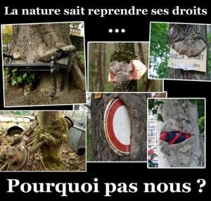 La nature sait reprendre ses droits