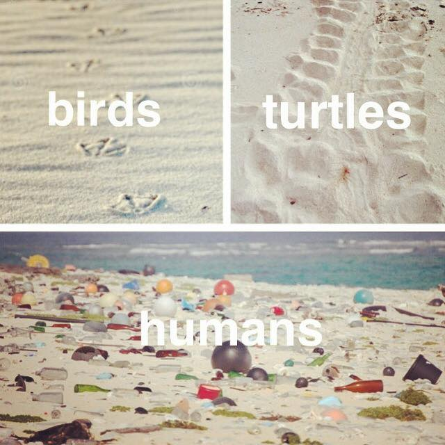 Birds ... turtles ... humans