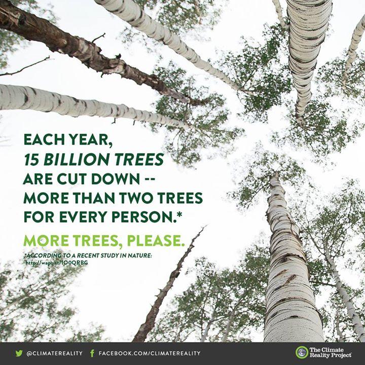 Each year 15 billion trees are cut down